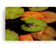 Frog Launching Pads Canvas Print