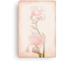 Peach-Colored Irises Canvas Print