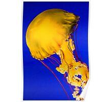 Sea Nettle Jellyfish Poster