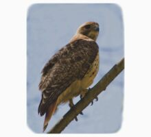 Red-tailed Hawk On Branch Kids Tee