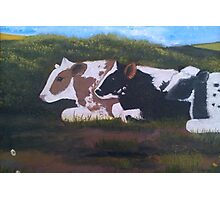 Lazy Cows Photographic Print