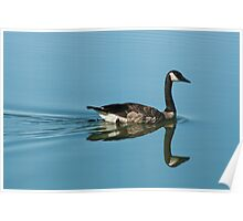 Swimming Goose on a Calm Lake Poster