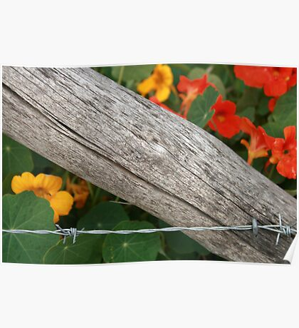 Barbed Wire Fence and Flowers Poster