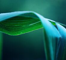 Corn Stalk Leaf by Laurie Minor