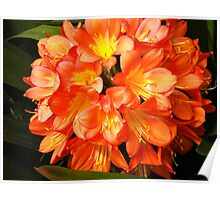 Big Orange Flower Image Poster