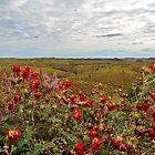 Millstream ~ Chichester National Park by Pene Stevens
