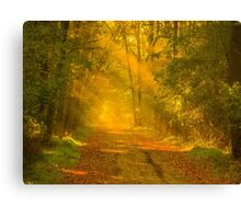Forest road Canvas Print