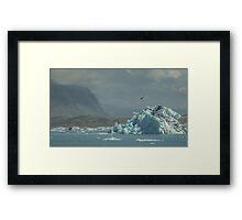 Arctic Tern at Glacier Lagoon Framed Print