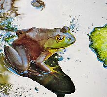 Sunbathing Frog by Christine Demaray-Brown