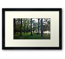 Forest through theTrees Framed Print