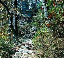 Hiking Stairway  by Christine Demaray-Brown