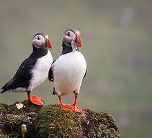 Love Birds by Wei Hao Ho