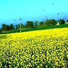 Road Side  by Dr. Harmeet Singh