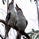 Kookaburras haven a chuckle  by Robert-Todd