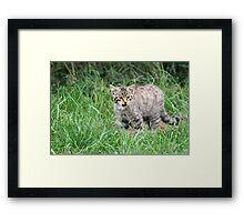 Wildcat Kitten Framed Print