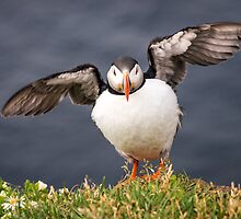 All Puffed Up by Wei Hao Ho