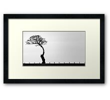 Reluctant Tree Framed Print