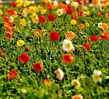 A field of love  by Nina  Matthews Photography
