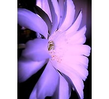 Photo of cactus flower Photographic Print