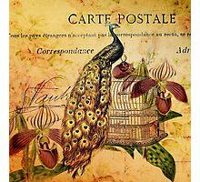 peacock orchid floral vintage botanical art Photographic Print