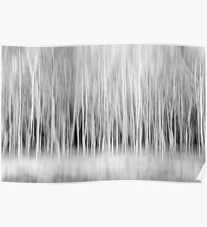 Forest Trees Abstract in Black and White Poster