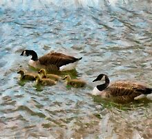 Canada Geese with young by RicIanH