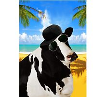 Cool Cow  Photographic Print