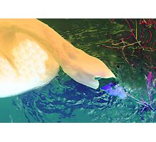 Swan change up Photographic Print