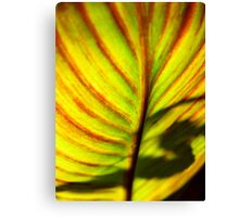 Shadow In S Canvas Print