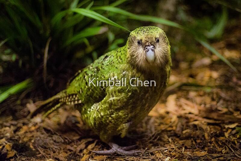 Sirocco the kakapo quot by kimball chen redbubble