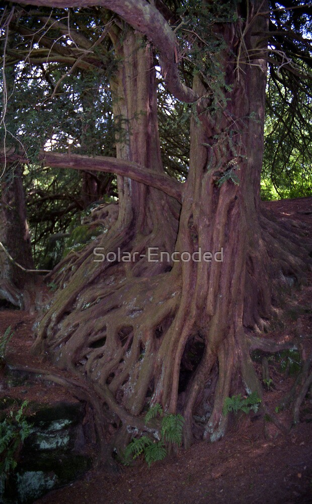 Trees 11 by Solar-Encoded