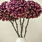 Chrysanthemums by bgbcreative