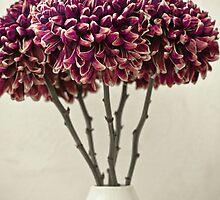Chrysanthemums by bgbcreative