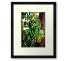 Stag fern Framed Print