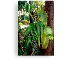 Stag fern Canvas Print