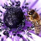 Bee my Anemone by mooksool