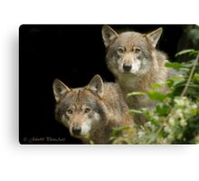 ...the World trough Wolves eyes...    [FEATURED] Canvas Print