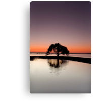 The First of Many - Victoria Point Qld Australia Canvas Print