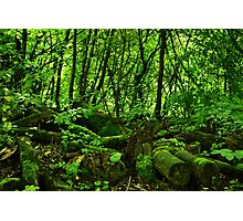 Green Light and Moss  Photographic Print