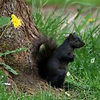 Squirrel and Dandelion by AnnDixon