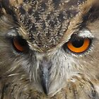Its in the eyes by Lorna Taylor