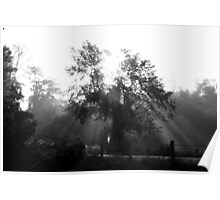Morning Sunrays and Tree Poster