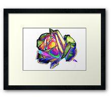 Splendiferous rose Framed Print