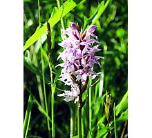 wild Orchid Photographic Print