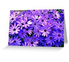 Purple flowers Greeting Card