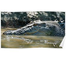 Reflections of a Saltwater Crocodile Poster