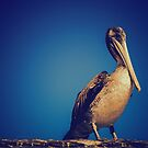 Pelican Posed by jjbentley