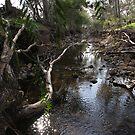 Koorawatha Creek by Phillip Weyers