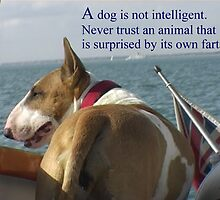 Sayings 'Dogs are not intelligent' by BBBango