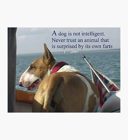 Sayings 'Dogs are not intelligent' Photographic Print